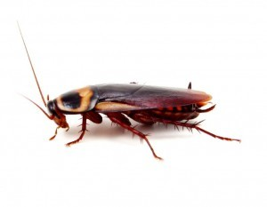 Cockroach Control Bexley Heath